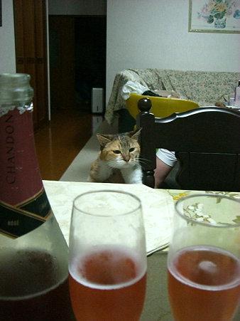 ナナも飲むにゃ