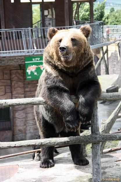 熊 カドリードミニオン
