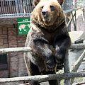 Photos: 熊 カドリードミニオン