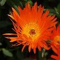 写真: 201104flower 757