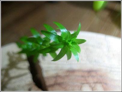 この葉っぱがタマラナイ・・・。
