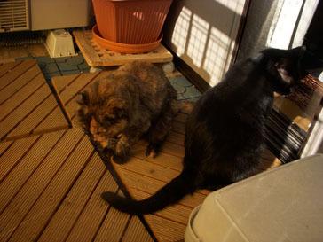 11-11-satsuki&yoru
