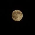 写真: moons