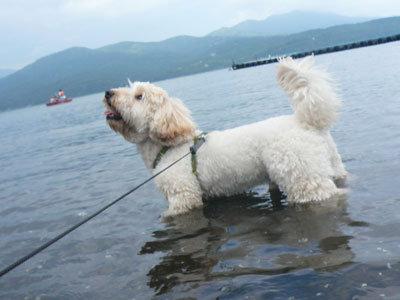 くーかい 山中湖に浸かる
