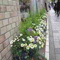写真: 街角の鉢植え