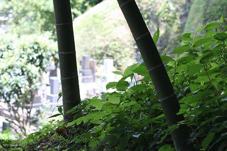 2009.08.09 鎌倉 円覚寺 お施餓鬼