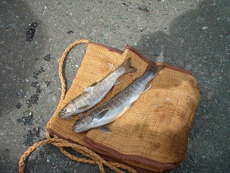 2005.05 白布 科織の魚籠