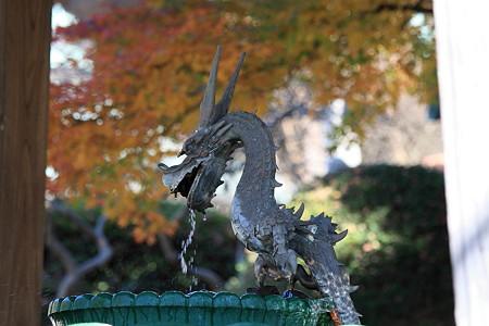 2010.11.29 藤沢 遊行寺 手水場の龍
