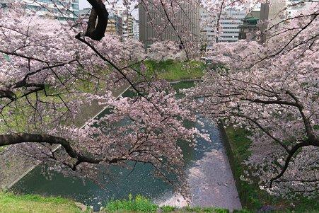 2011.04.11 皇居 北の丸公園 牛ヶ淵