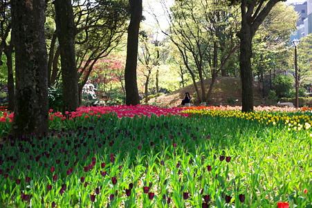 2011.04.15 横浜公園 チューリップまつり-8