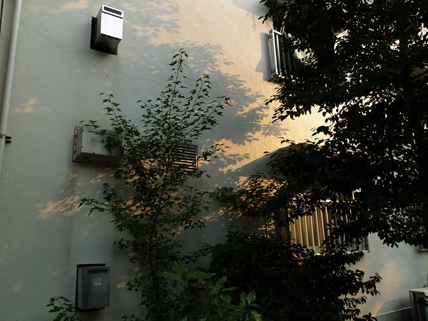 樹の投影・青空団地夢号棟: 2006_0805_olymp_E-500_8055618