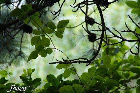 summer green...