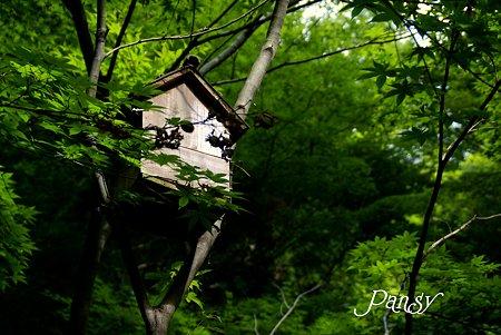 朝陽のあたる巣箱・・
