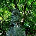 写真: 緑陰の狛犬・・