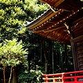 写真: 光のなかの神社・・
