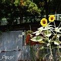写真: 夏の名残り・・