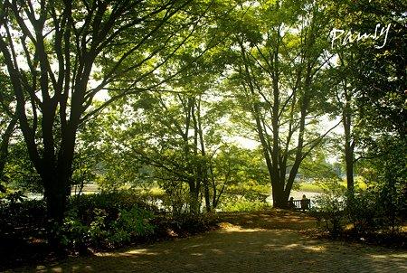 秋の木漏れ日・・