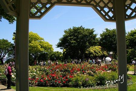 rose garden..5