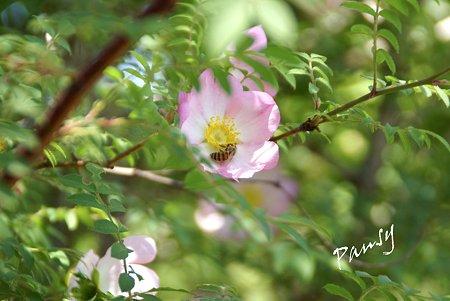 rose garden..17