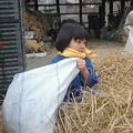 Photos: 脱穀'09 (11)