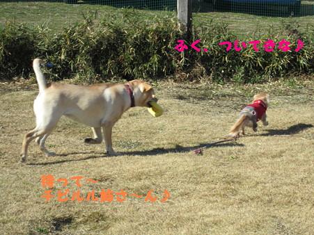 追いかけっこ(2)