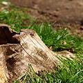 写真: とある日の午後、公園にて20090323_3