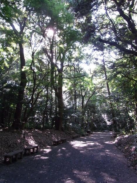 【東京|渋谷・原宿】 明治神宮 参道からの脇道