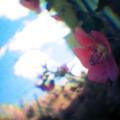 Photos: 改造カメラ GBポケットテスト