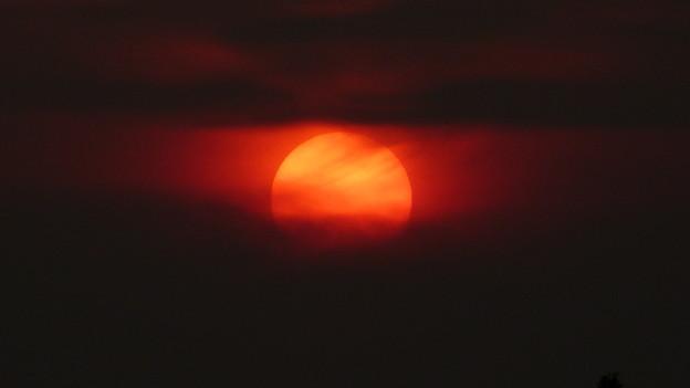 夕陽の表情 P1410827