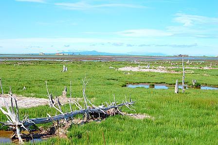 トドワラのはるか向こうに、野付半島ネイチャーセンターが見える。歩いて帰るのはだるい(苦笑)