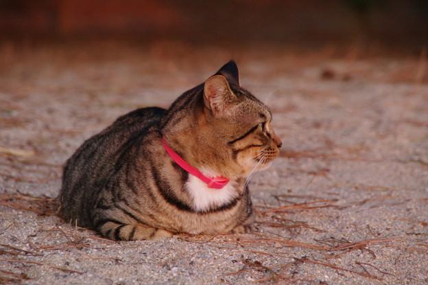 夕日見物の猫(1) 横も見てみる
