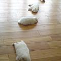写真: 昨日の萌え倒れワンコが6,...