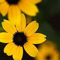 写真: 黄色い星