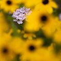 写真: 黄色い守り神