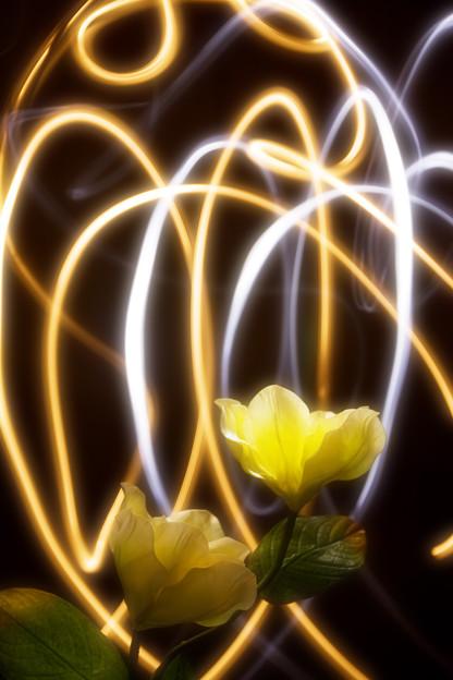写真: 花と光