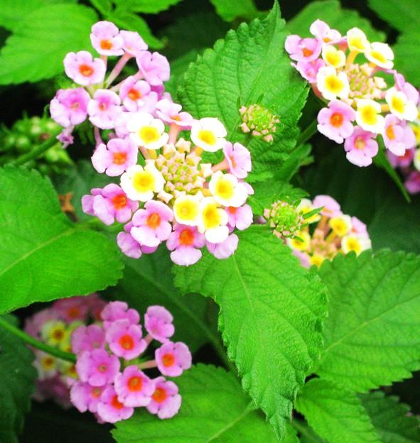 畑の野の花