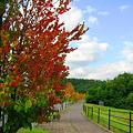 写真: 街路樹に秋