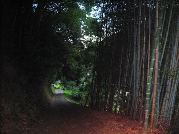 山奥の細道
