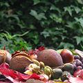 写真: 木の実がいっぱい