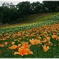 Photos: 2009年所沢ゆり園_2009001