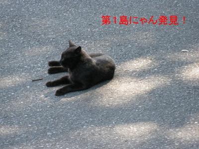 第1島にゃん発見!