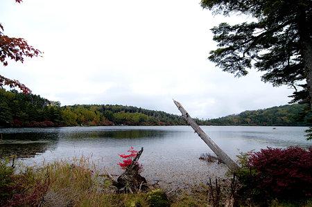 Photos: 白駒池畔
