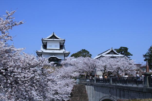 青空と満開のソメイヨシノ 石川門