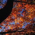 Photos: 紅葉の戸定公園