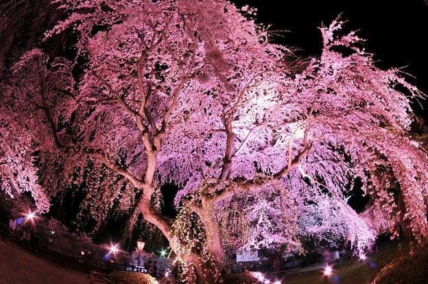 魚眼で弘前城本丸の夜桜を・・