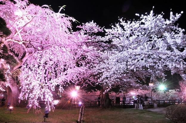 ピンクとホワイトの夜桜・・弘前城本丸