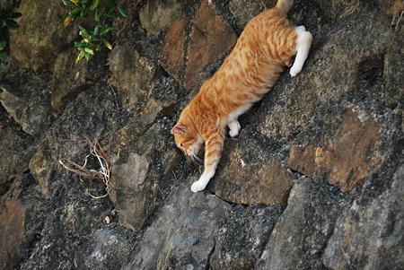 童謡の園・猫4