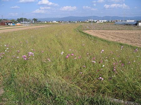 斑鳩 田園風景