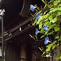 写真: 飛騨高山 03