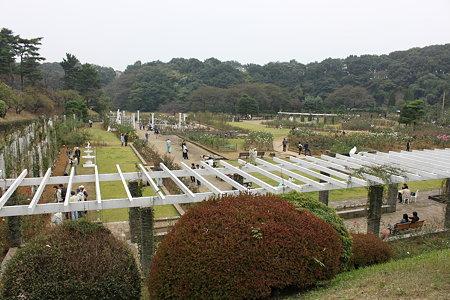 生田緑地バラ園